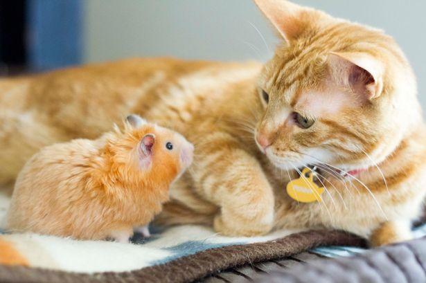 ¿Tienes una casa pequeña y quieres adoptar a una mascota?